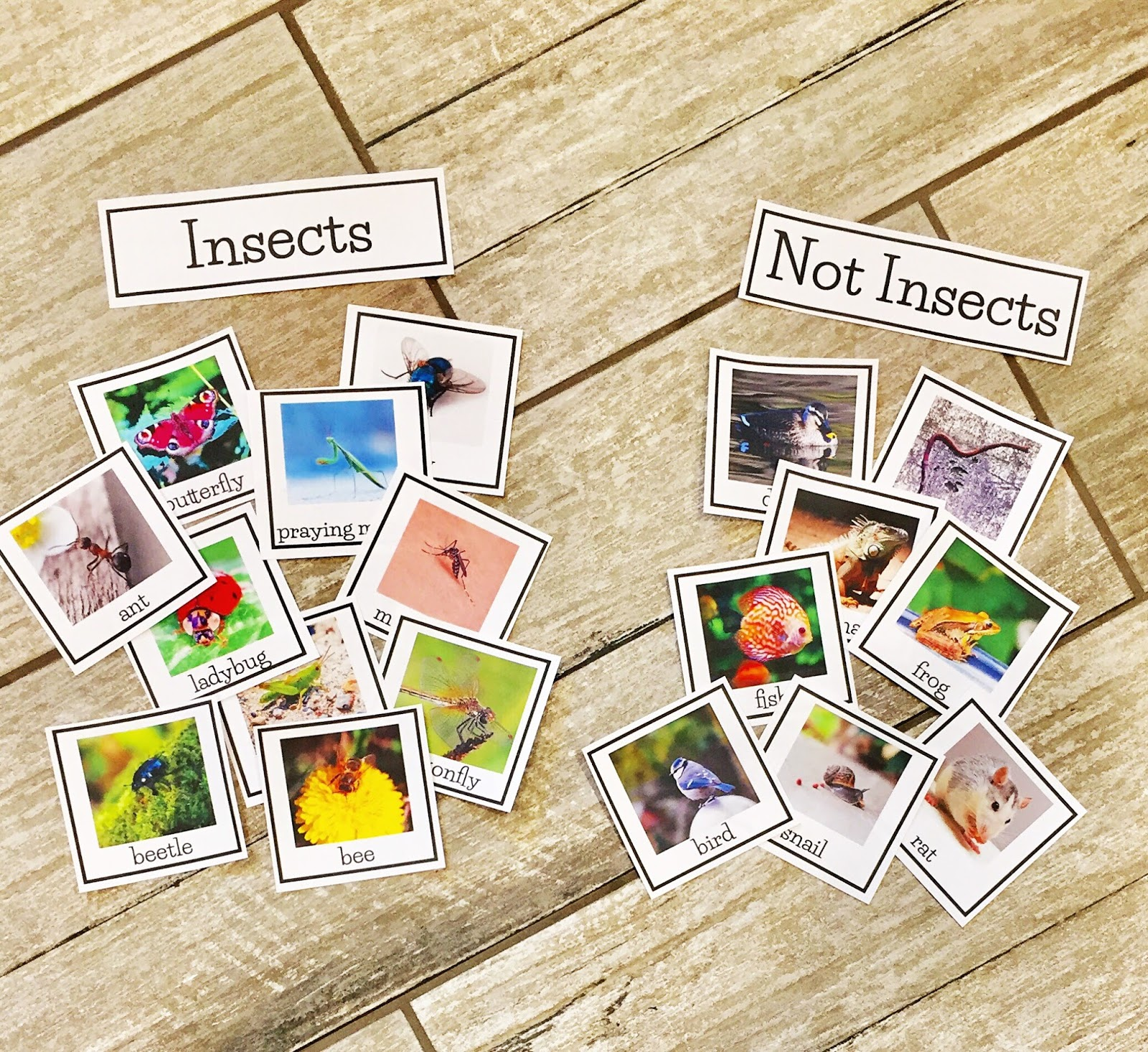 Insect Activities In First Grade