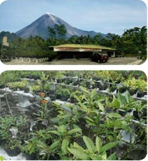 Merapi Farma Herbal