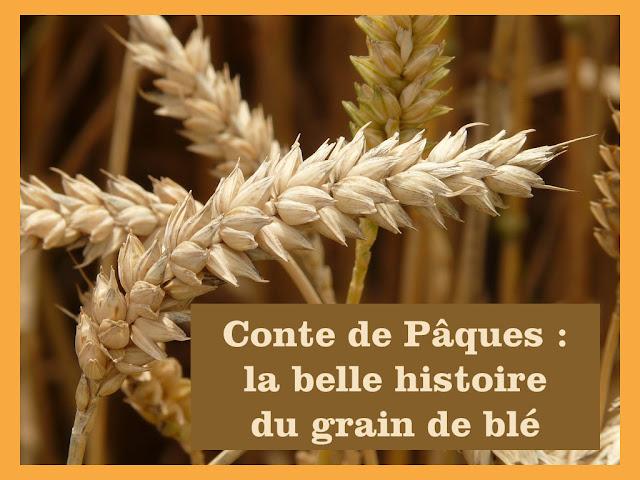 CONTE le grain de blé