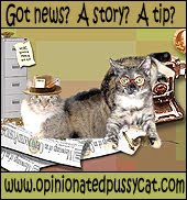 The Feline News Network