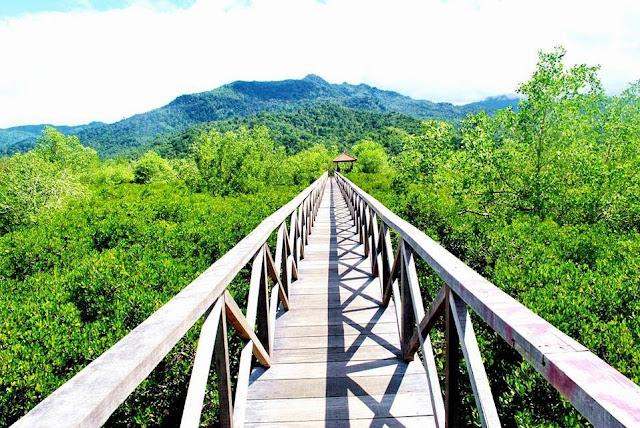 Hutan Mangrove / Jembatan Galau Cengkrong