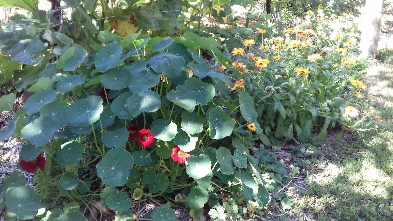 le potager des violettes: fleurs et potagers octobre au jardin des ...