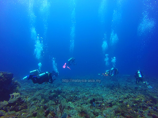 Alor Island scuba diving best time