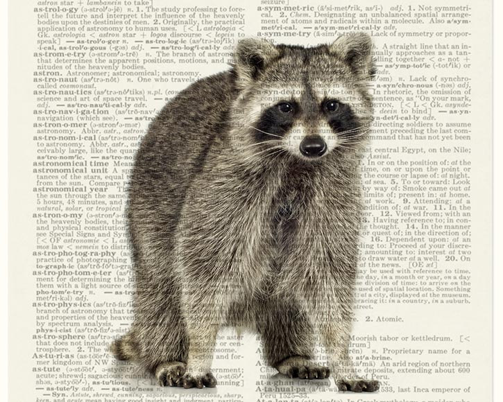 20-Raccoon-Jean-Cody-Vintage-Dictionary-Page-Art-Prints-www-designstack-co