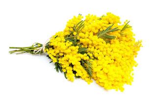 Цветы Виктории - мимозы