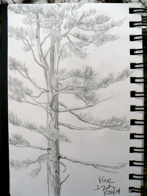 Pine tree pencil sketch