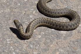 mystery snake in jamb office