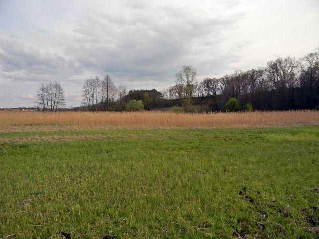 trawy, wiosna, trzcina, drzewa