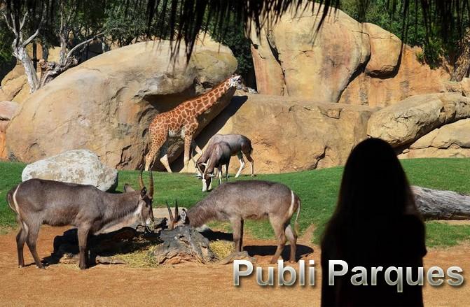 Visitante en la sabana africana de Bioparc Valencia