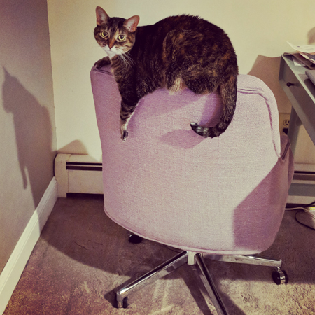 image of Sophie the Torbie cat balancing with mega-chill on the back of my office chair