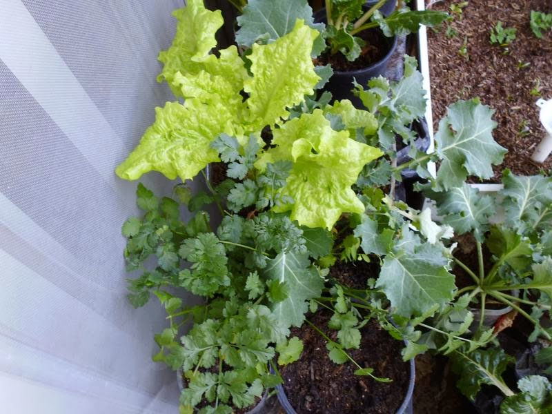 Balcony Greens 2 Feb 17