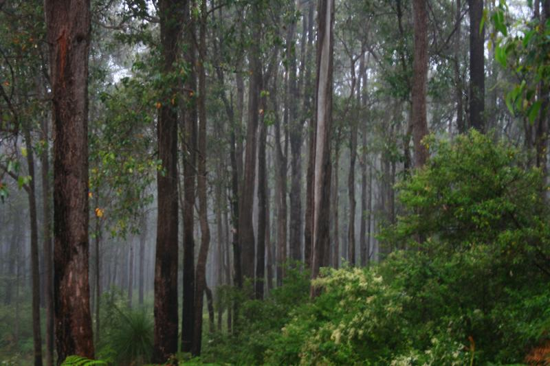 Misty Atmosphere at Yalgroup National Park