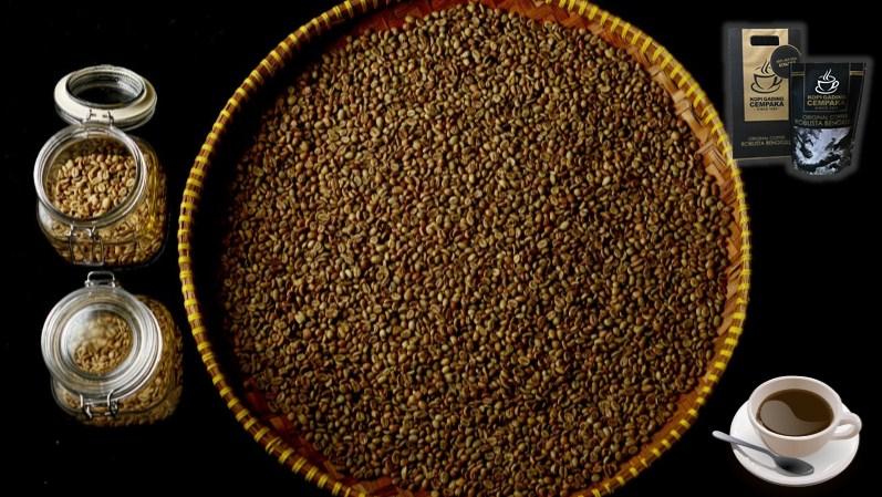 kopi-gading-cempaka, kopi-gading-cempaka-bengkulu, nikmatnya-kopi-gading-cempaka-bengkulu, Nimatnya Seduhan Kopi Gading Cempaka Bengkulu