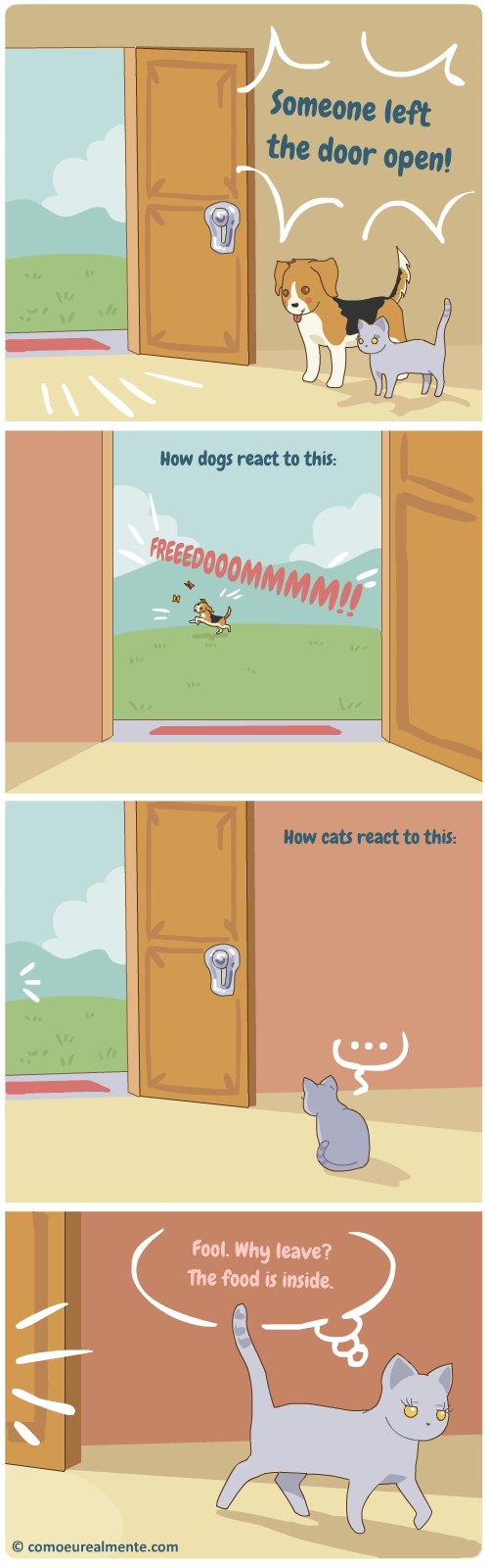How cats and dogs really react to freedom