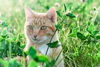 Tout savoir sur le coup de chaleur chez le chat