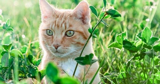 Dogteur tout savoir sur le coup de chaleur chez le chat - Coup de chaleur chat symptomes ...