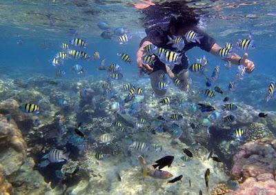 foto pemandangan bawah laut pulau tidung terbaru