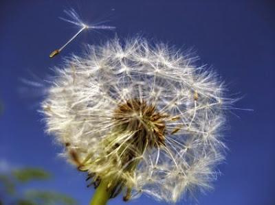 Φαγώσιμα και φαρμακευτικά φυτά