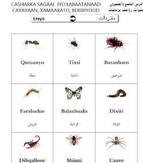 تعلم النحو الصومالي