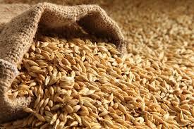 barley(jau) health benefits in urdu