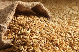 barley(jau) health benefits in urdu