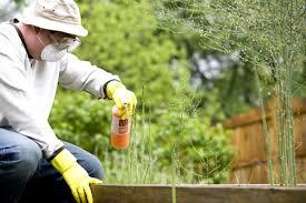 10 Alternative to Natural Pesticides and Organic Farming