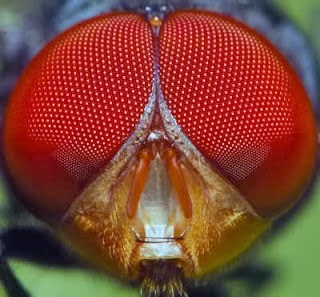 mata lalat lalat lalat lalat lalat lalat lalat lalat lalat lalat lalat lalat lalat lalat lalat lalat lalat lalat lalat lalat lalat lalat lalat lalat lalat lalat lalat lalat lalat lalat lalat lalat lalat lalat lalat lalat lalat lalat lalat lalat lalat lalat lalat lalat lalat lalat