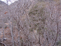 One month into autumn, these deciduous trees stand bare, as seen from Fish Canyon Trail en route to Fish Canyon Falls