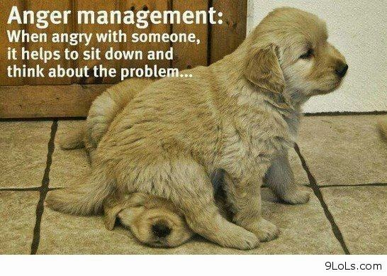 Funny Words: Rules Of The Jungle: Funny Dogs With Sayings