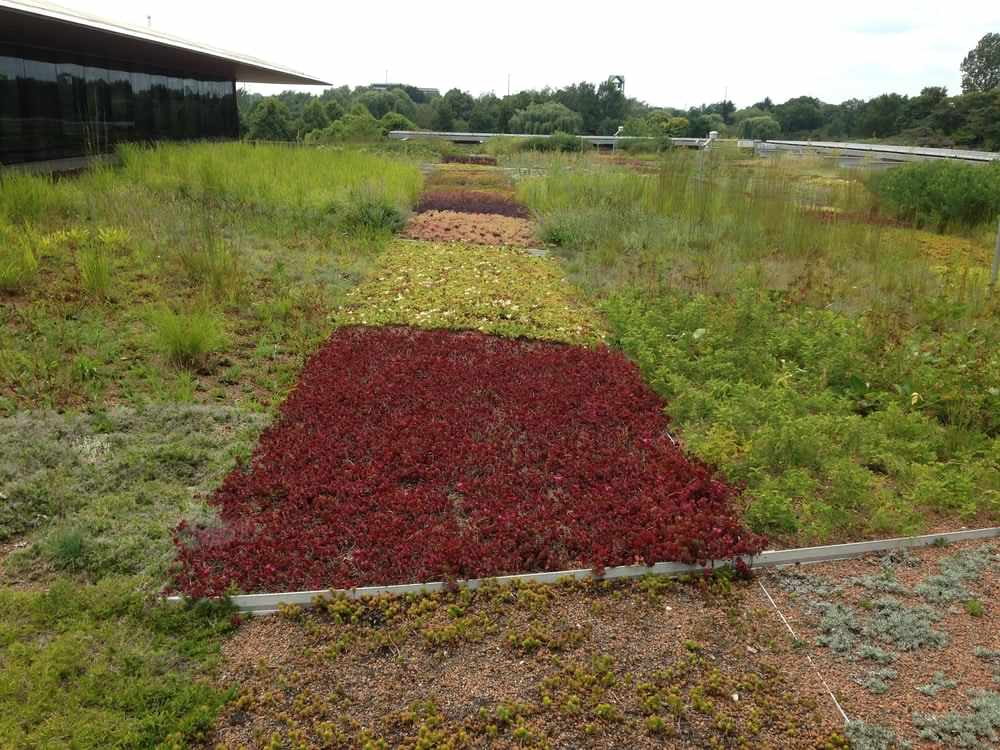Green roof at Chicago Botanic Garden with plants known as good for green roofs plus potential one. A tapestry of sedums in the middle
