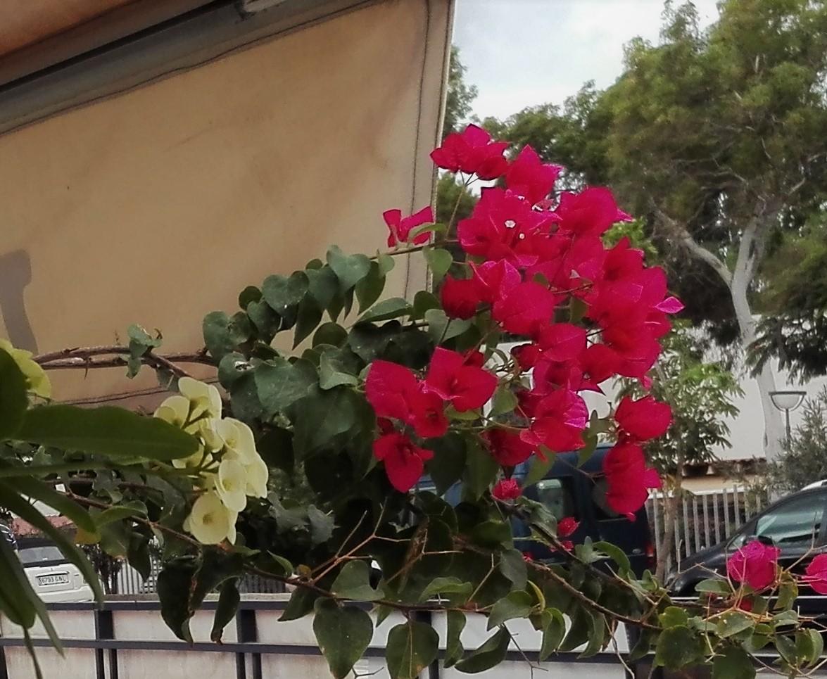 Nu blommar gubben
