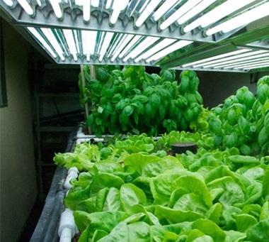 alternativa-ai-tubi-neon-per-coltivare-indoor