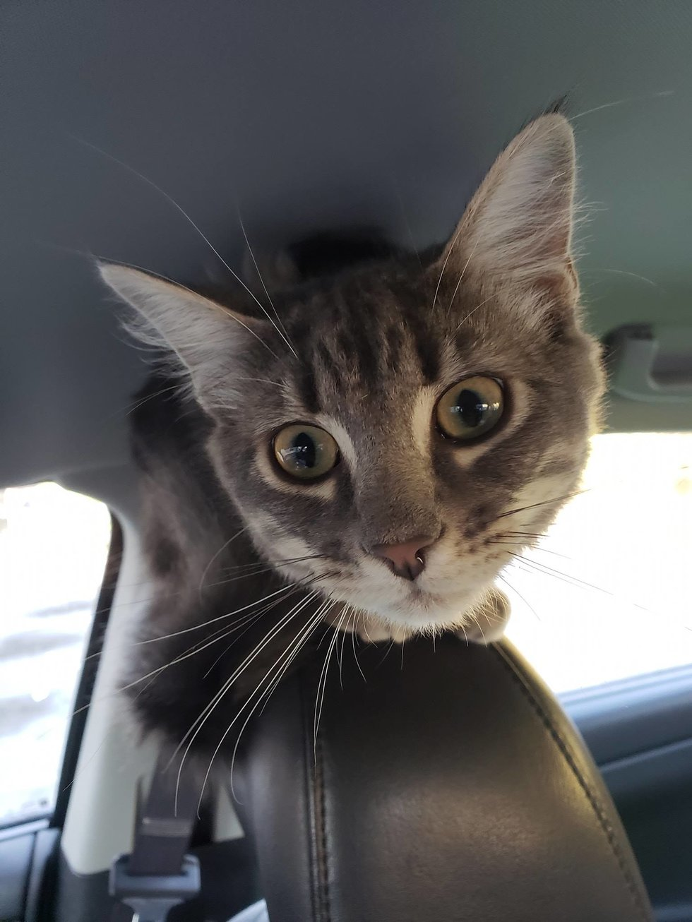 Kitten Saved by Officer Insists on Being His Partner and Offers Everyone Help