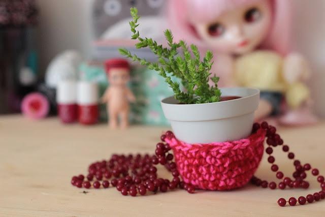 mini suspension succulente