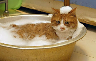 15 Tips on Bathing the Fearing Cat Water - Coloring Pages