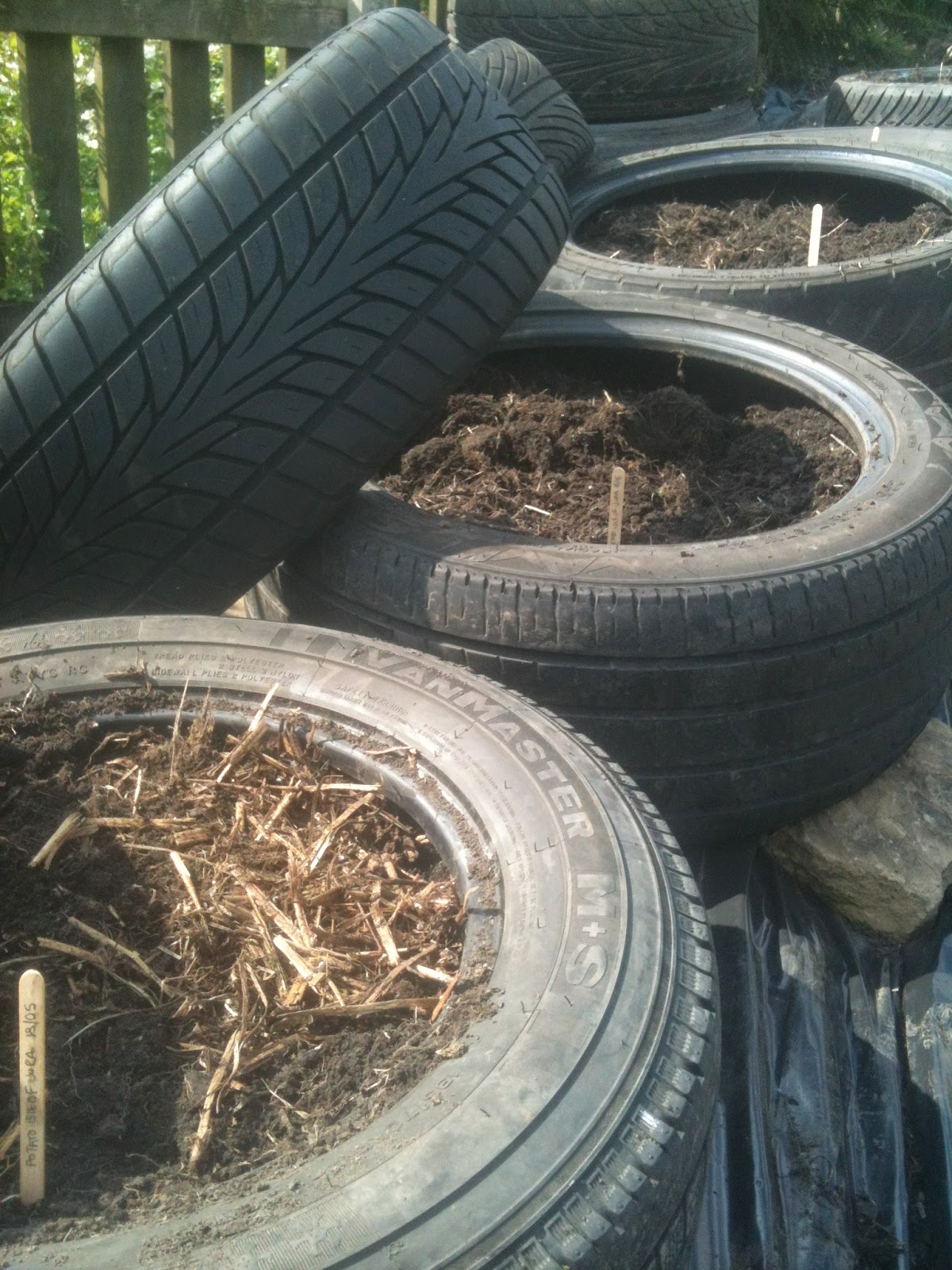 Potatoes in tyres can mean greater yields.