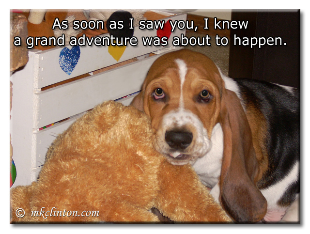 As soon as I saw Bentley, I knew a grand adventure was about to happen. Bentley Basset Hound puppy
