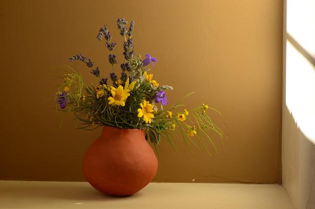 desert garden, small sunny garden, amy myers, photography, monday vase, senna nemophila, argyranthemum frutescens, eremophila hygrophana