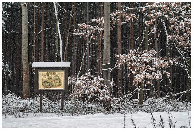 Winter im Zeitzer Forst V