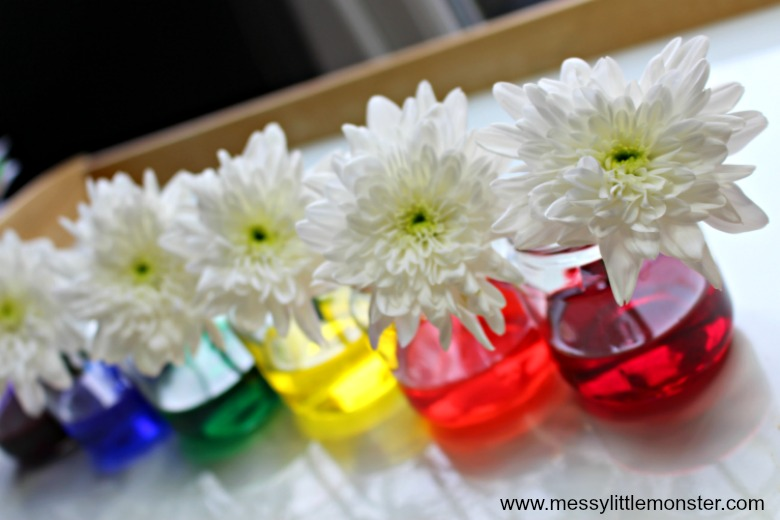 Colour Changing Flowers Science Experiment for preschoolers