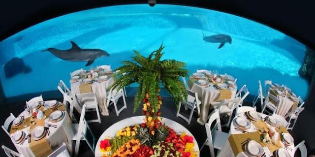 Aquarium Wedding Venues Texas State Aquarium