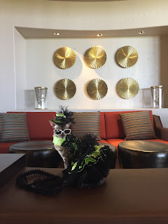 Coco, the Cornish Rex, posing for photos at the Sheraton Wild Horse Pass Resort