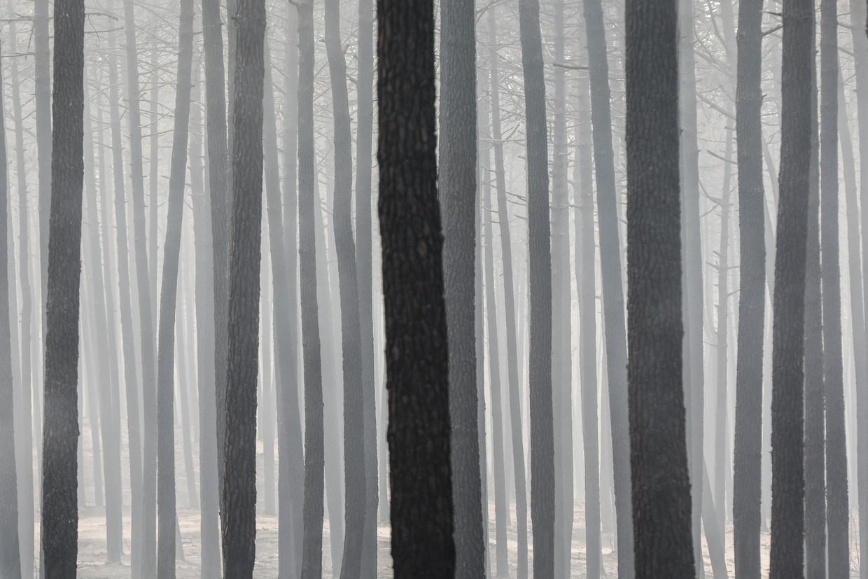 guida fine arts  reino das cinzas post idioms en pt