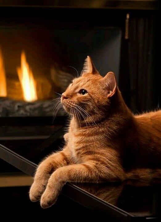 Mejores Películas con gatos verdaderos