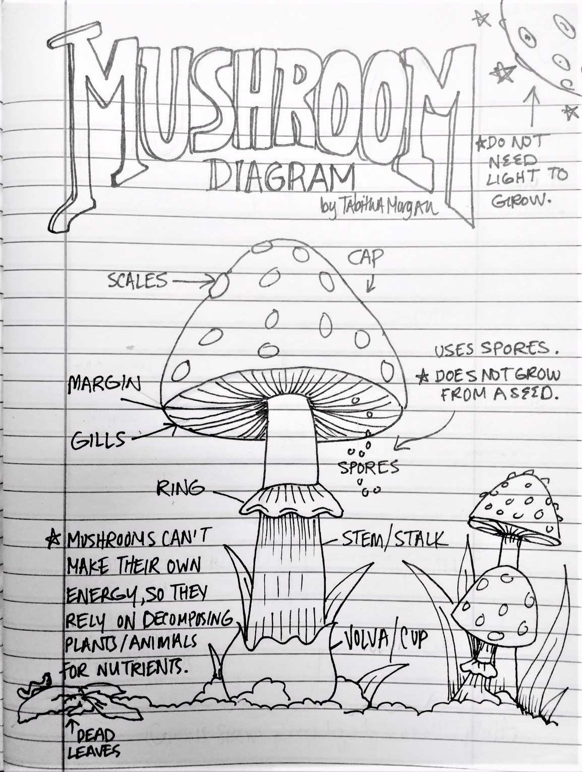 The lost sock mushroom color sheet pooptronica Images