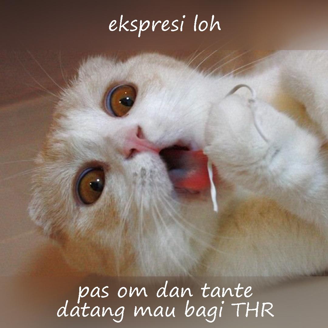 Meme Lucu kucing lucu bagi THR