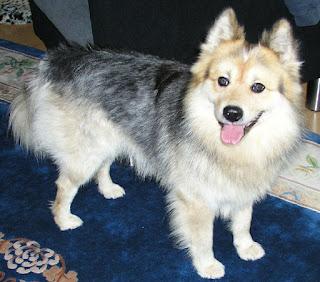 Elo (dog)-pets-dog breeds-dogs-pet