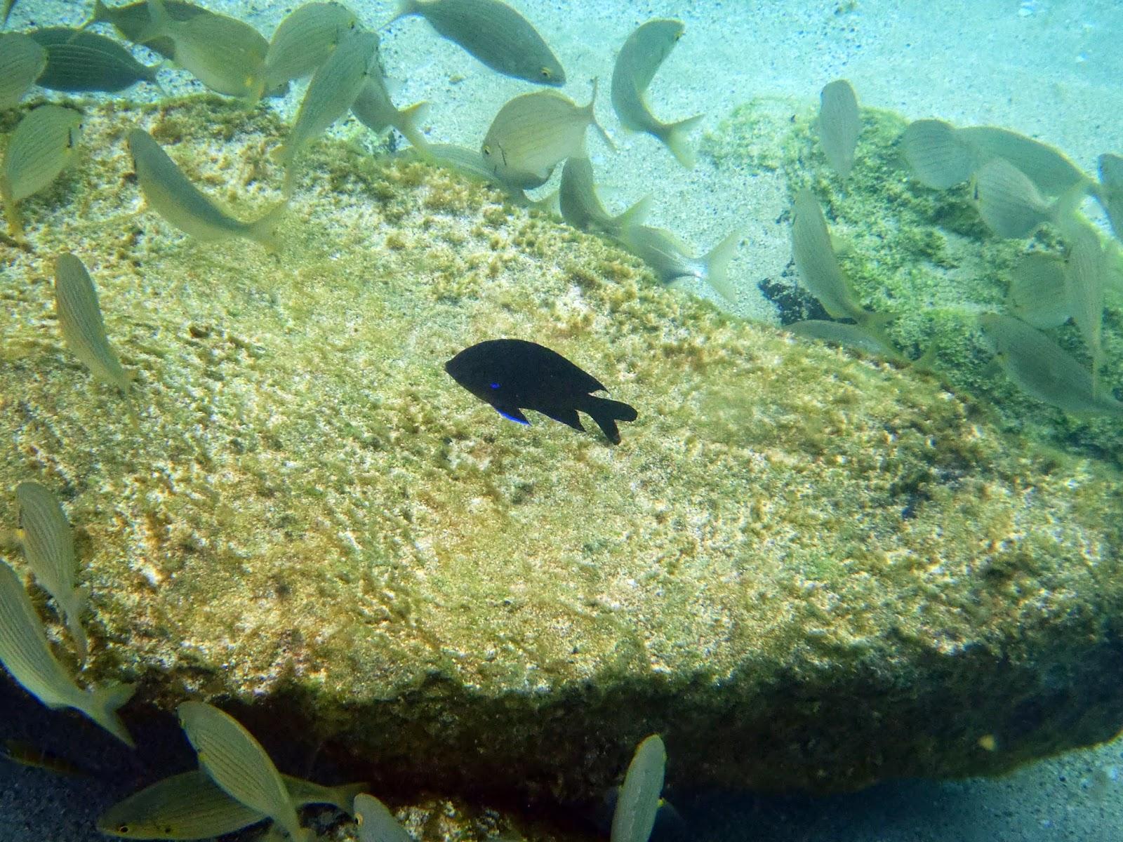 dónde hacer snorkel en las islas canarias