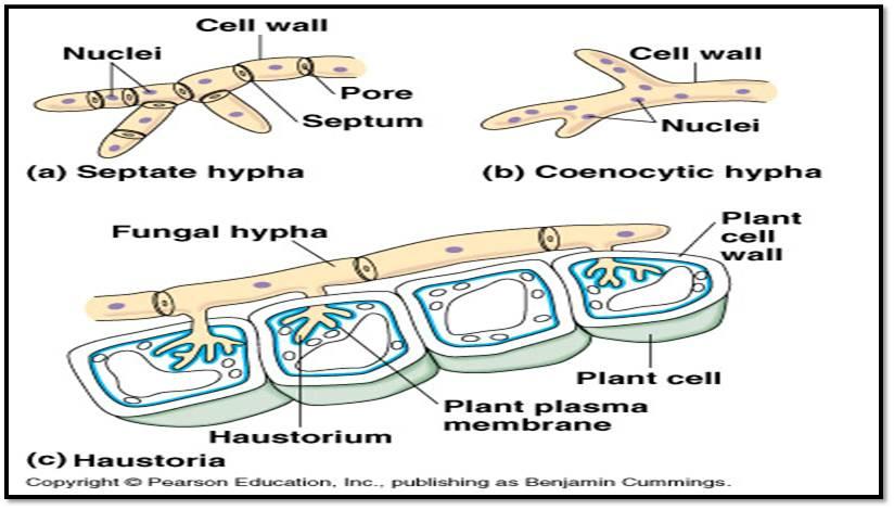 Biologi: Ciri-ciri umum