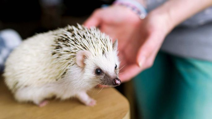 Best Worst Pets For Apartment Living